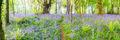 Bluebell Beauty print