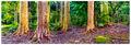 Chroma Eucalyptus print