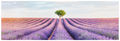 Lavender Alight print