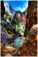 sandstone, river, tree, The Narrows, Zion, National Park, rocks, Canyon