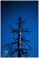 stars, astrophotography, silent night, beauty, tree