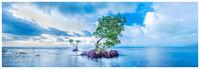 Mangrove Blues