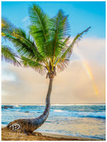 rainbow, palm, maui, hawaii, drizzle, mama, fish house, sky, blue, magnificent