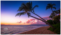 sun, setting, coast, Maui, Hawaii, evening, palms, sunset, shoreline, calmness, glow, clouds, ocean