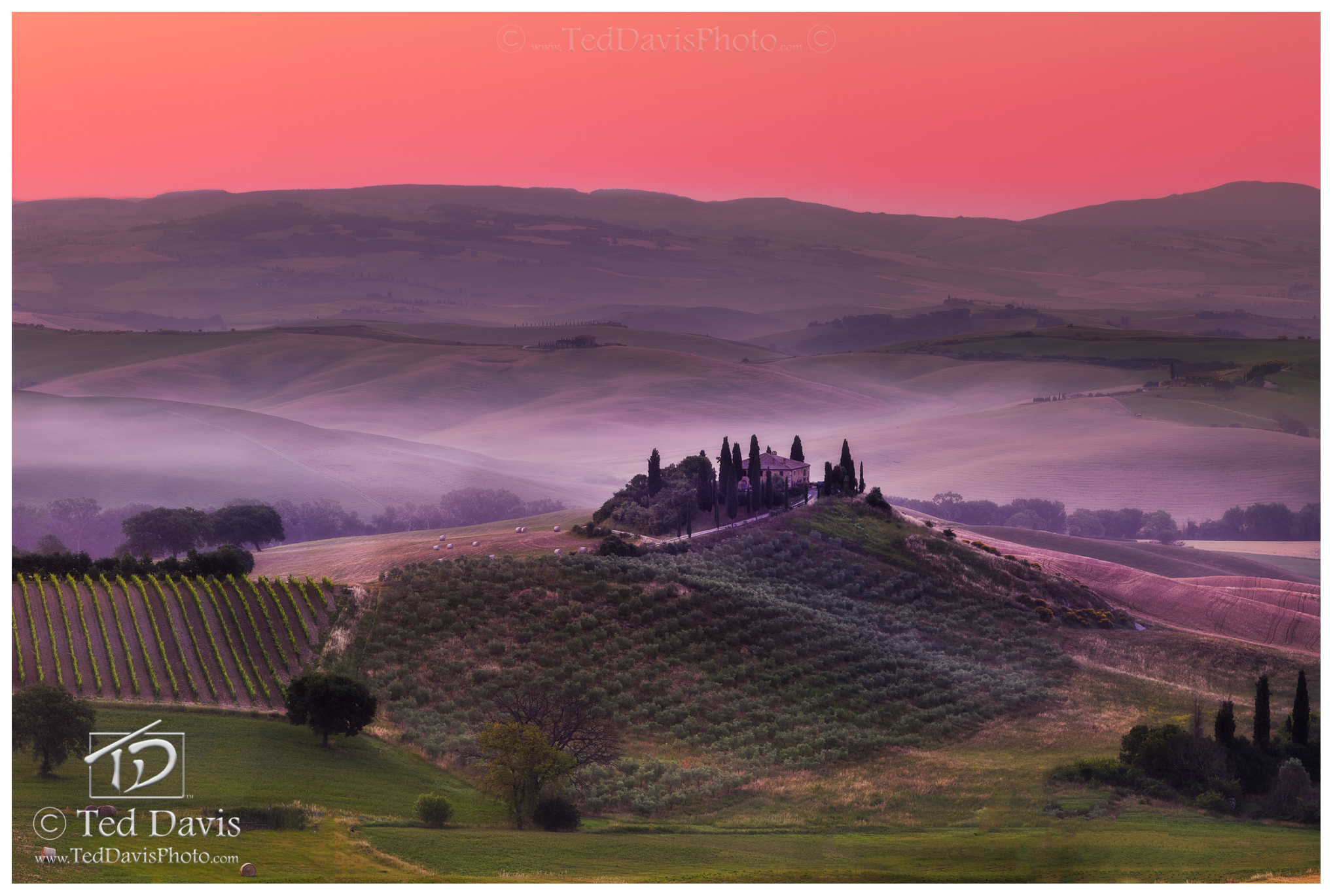 italy, tuscany, tuscan, wine, olive, grape, belvedere, idyllic, dawn, fog, montalcino, landscape, beauty, timeless, cultivating, perfect, photo