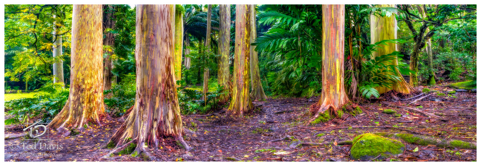 maui, hawaii, eucalyptus, chroma, trip, rainbow, islands, trees, vibrant, color, photograph, beautiful, hana, road to hana, arboretums, gardens, botanical, otherwordly