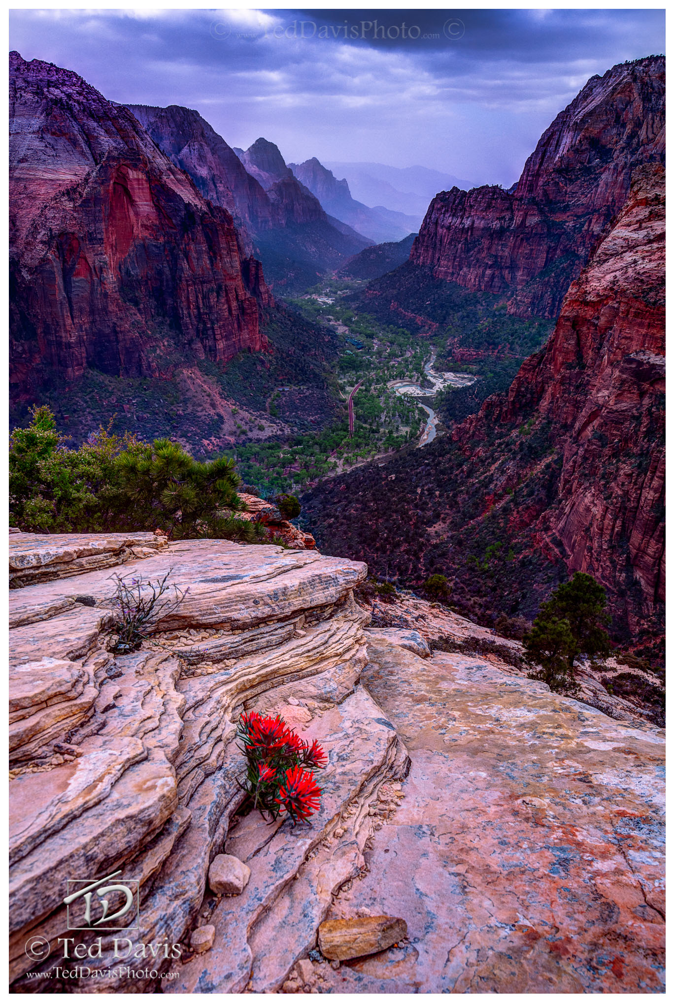 Zion, National Park, edge, red flower, thunderclouds, canyon, photo