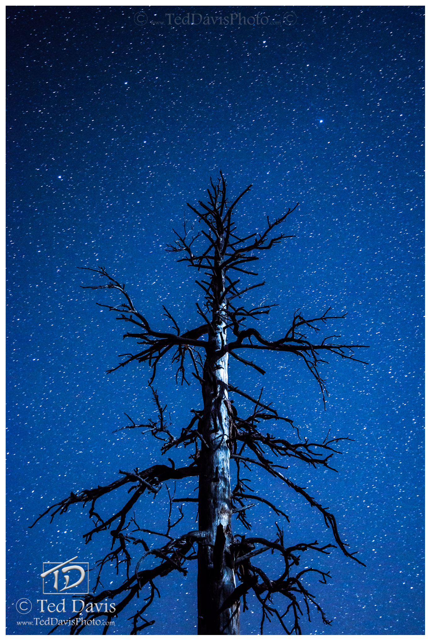Limited Edition of 200 A singular tree amidst a million and more stars. Evening Sentinel was my first successful attempt of astrophotography...