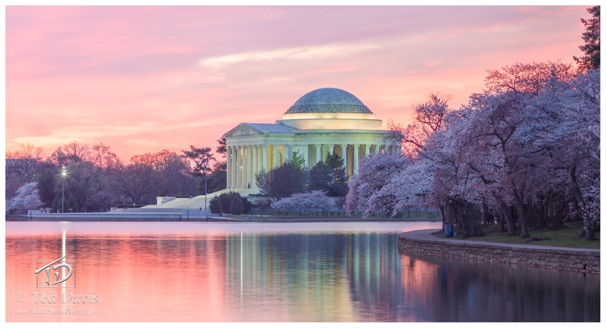 Tidal, Basin, Washington, DC, Jefferson, Memorial, Cherry, Blossoms, marvelous, pink, whites, pastels, photo
