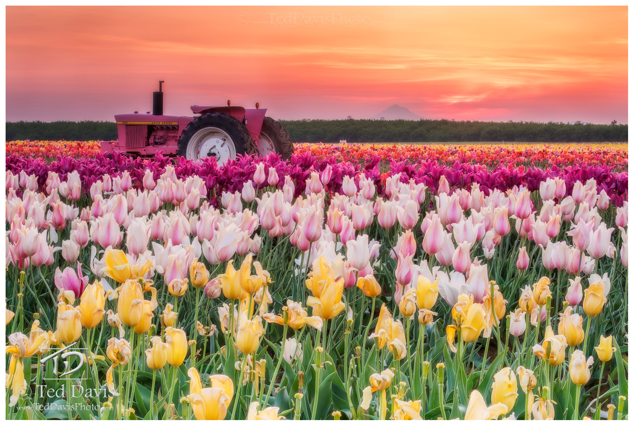 photograph, art, landscape, travel, sunrise, sunset, mountain, field, flowers, tractor, farmers, valley, Willamette, Oregon, trail, beautiful, claim, land, settle, focus, hood