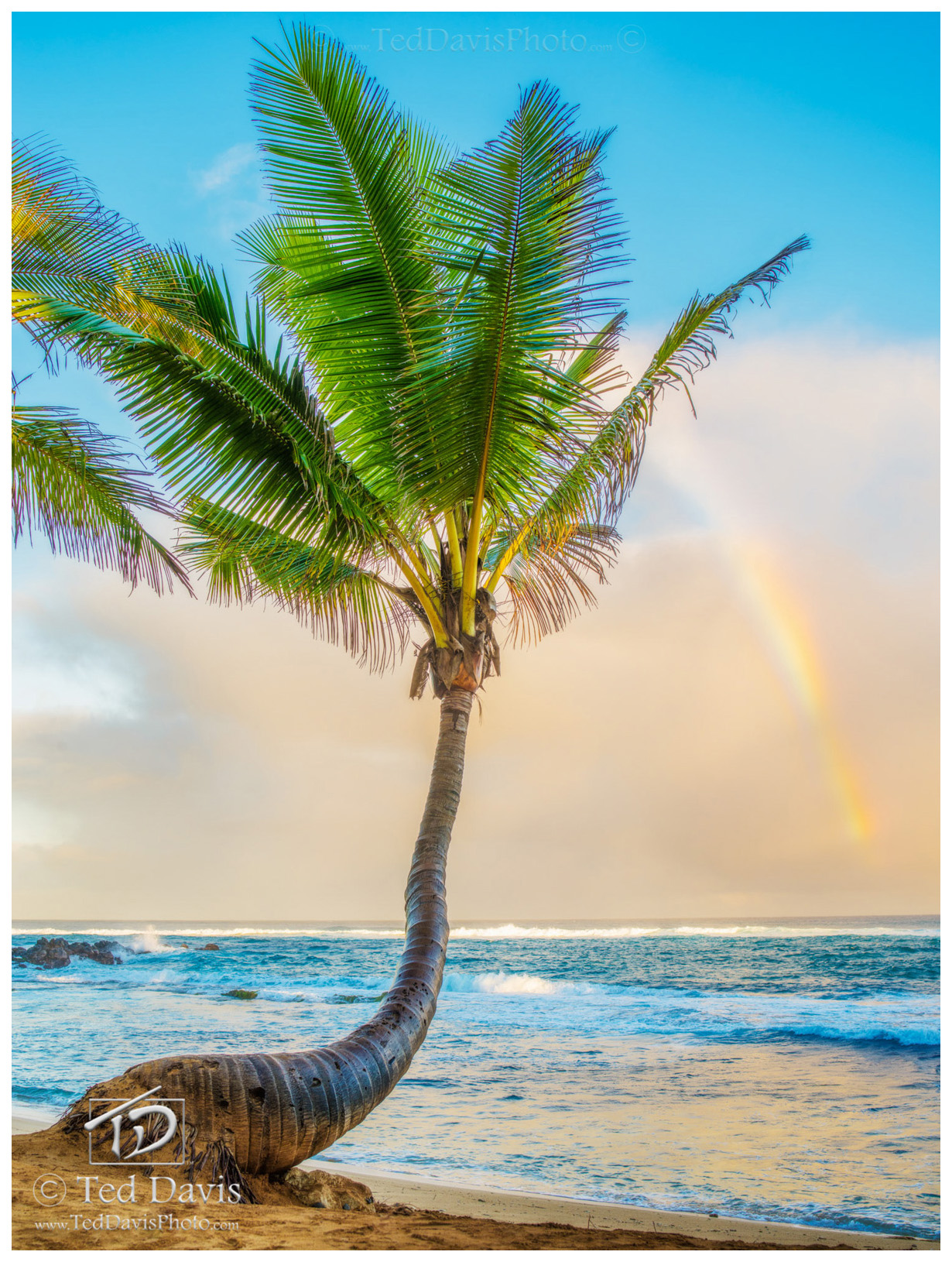 rainbow, palm, maui, hawaii, drizzle, mama, fish house, sky, blue, magnificent, photo